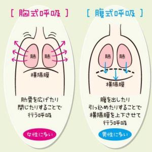複式呼吸と胸式呼吸と腹圧