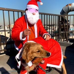 《里親募集準備中》サンタと一緒にメリークリスマス!