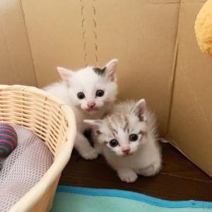 新入りさん、いらっしゃ〜い⁈  子猫編