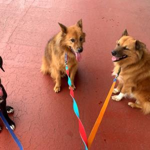 《大型犬雑種里親募集中》めいちゃんは、一人っ子向き?複数匹向き?