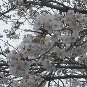 「生きている、生命があるだけ幸せと思い、少しだけ我慢」ー今年は恒例の京阪神への旅行は自粛禁止決定