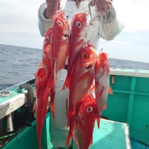 4月28日(水) 金目鯛釣果