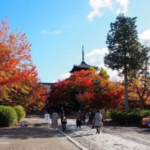 奥深い京都を覗いてみたいなら