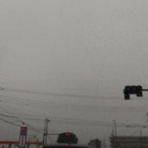レオ地方を含む九州北部が梅雨入りしました🐕️