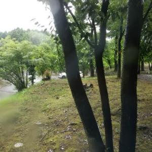 今日も雨です☔️