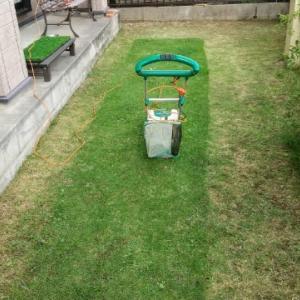 芝刈りをした庭で遊んだよ☀️