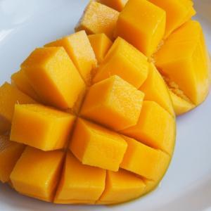 おいしいマンゴーの季節がやってきました。