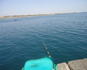 大磯港東堤防の小メジナ釣り!