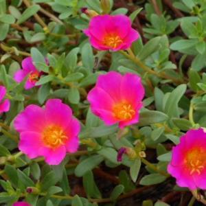 花と緑の園(5)