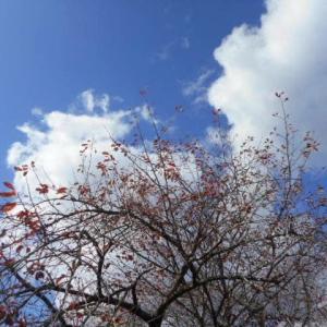 アーモンド風味のシフォン。秋空。
