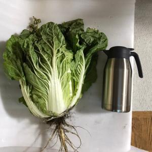 大きな白菜
