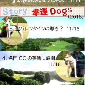 Story 幸運Dogs6.CCトリオの1年9か月