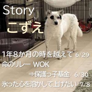 Storyおとめ:多くの人が1匹の犬の幸せを願って・・・