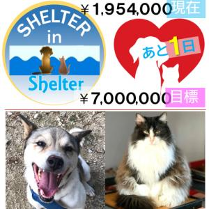 Humane51. 老犬の預かり/母子猫の保護/青森県から支援物資
