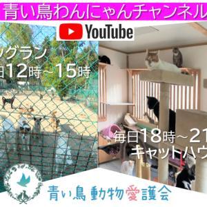 ライブ配信「青い鳥わんにゃんチャンネル」変更のお知らせ