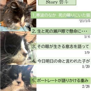 Story碧斗6.流れ星のように光跡を残して・・・