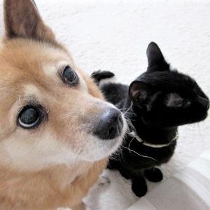 Diary6/2~8 犬猫と一緒にスマホ脳からリカバリー