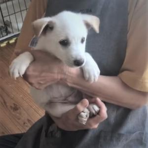 Story命のリレー:子犬ロイが正式に譲渡されるまで