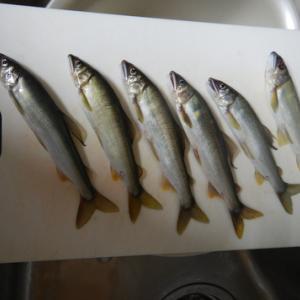 興津川やっと釣れだす。