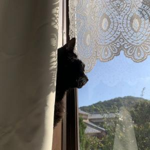 窓辺が似合う男