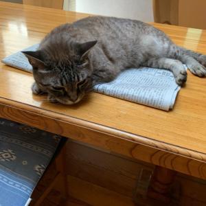 暑い日の猫の居場所