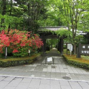 堀辰雄文学記念館の新緑とツツジ