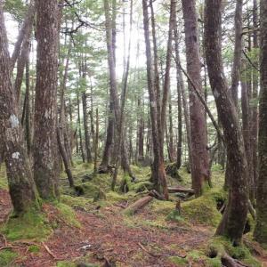 白駒の池・苔の森に行ってきました。