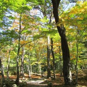 浅間神社の紅葉が綺麗に!