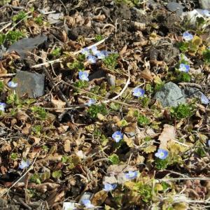 春の陽気で小さな花が咲いていました。