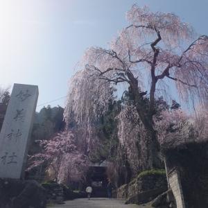 群馬県の妙義神社へお花見に