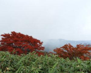 黒倉山から大地獄谷の紅葉きれいに見えます