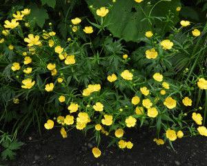 梅雨の晴れ間に花の百名山