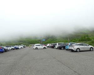 霧の八幡平にニッコウキスゲとアオノツガザクラ咲きました