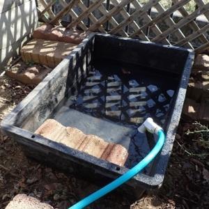 カメを冬眠から起こす。メダカ屋外水槽掃除。