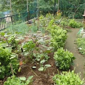 家庭菜園進捗10月
