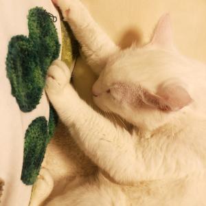 【実家のこと】まず、猫の相談