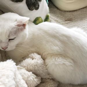【猫】猫コタツが壊れた…