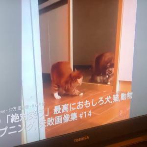 【部屋】TVでYouTubeと、この先はアレクサかな