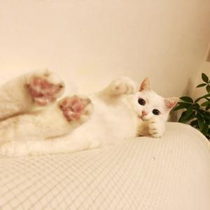 【猫】検診とワクチン接種