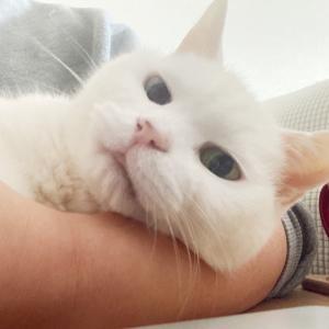 【猫】テレワーク中の猫⑧ 可愛いがお仕事