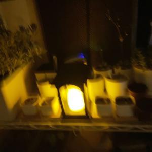 【雑記】植物育成ライトでソーラーライト(何やってんだ)