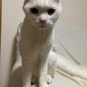 【猫】諦めきれない多頭飼育
