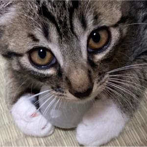 【猫】あれ、寂しく…