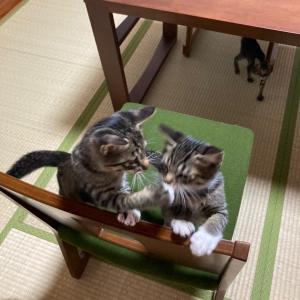 【猫】明日はワクチンと見学
