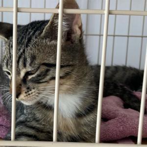 【猫】ワクチン接種と見学