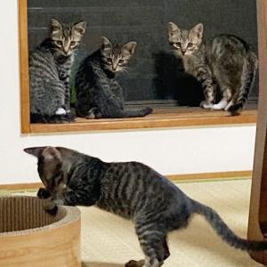 【猫】里親探しの偏見