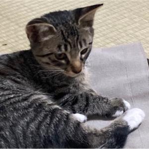 【猫】カリン君は今週末に決まるかも