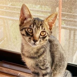 【猫】引き渡しと、見学