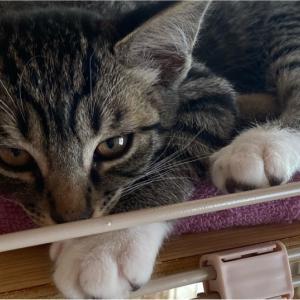 【猫】子猫動画 ただただ子猫