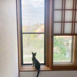 【猫】子猫の夢を見た